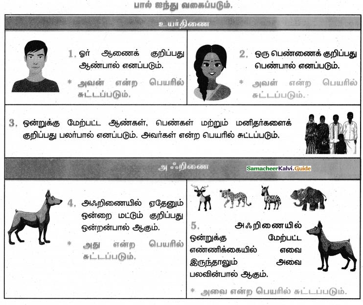 Samacheer Kalvi 4th Tamil Guide Chapter 2 பனைமரச் சிறப்பு - 4