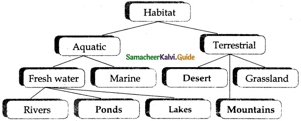 Samacheer Kalvi 6th Science Guide Term 1 Chapter 4 The Living World of Plants 5