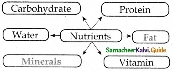 Samacheer Kalvi 6th Science Guide Term 1 Chapter 6 Health and Hygiene 3