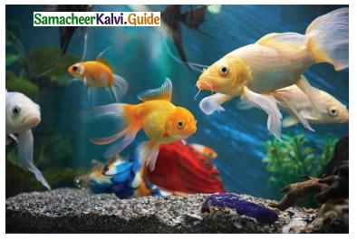Samacheer Kalvi 6th Science Guide Term 2 Chapter 4 Air 2