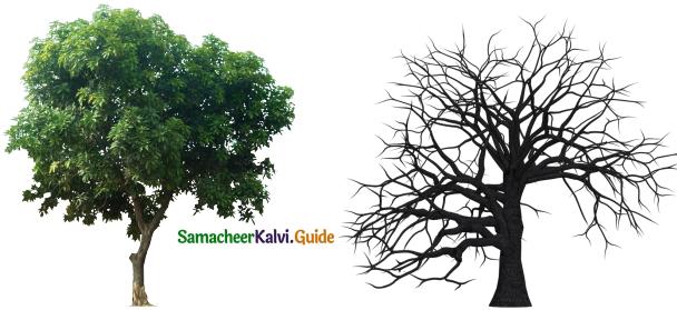 Samacheer Kalvi 9th English Guide Poem 3 On Killing a Tree