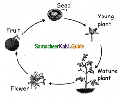 Samacheer Kalvi 5th Science Guide Term 2 Chapter 3 Plants 12