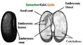 Samacheer Kalvi 5th Science Guide Term 2 Chapter 3 Plants 9