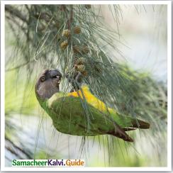Samacheer Kalvi 12th English Guide Poem 2 Our Casuarina Tree 2