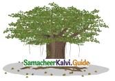 Samacheer Kalvi 4th English Guide Term 2 poem 3 The painter 10