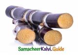 Samacheer Kalvi 4th English Guide Term 2 poem 3 The painter 11