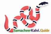Samacheer Kalvi 4th English Guide Term 2 poem 3 The painter 13