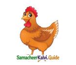 Samacheer Kalvi 4th English Guide Term 3 Supplementary 3 The Magic pencil 4