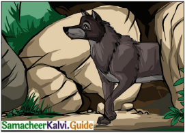 Samacheer Kalvi 6th English Guide Term 3 Play Chapter 1 The Jungle Book 3
