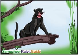 Samacheer Kalvi 6th English Guide Term 3 Play Chapter 1 The Jungle Book 6