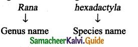Samacheer Kalvi 9th Science Guide Chapter 17 Animal Kingdom 6
