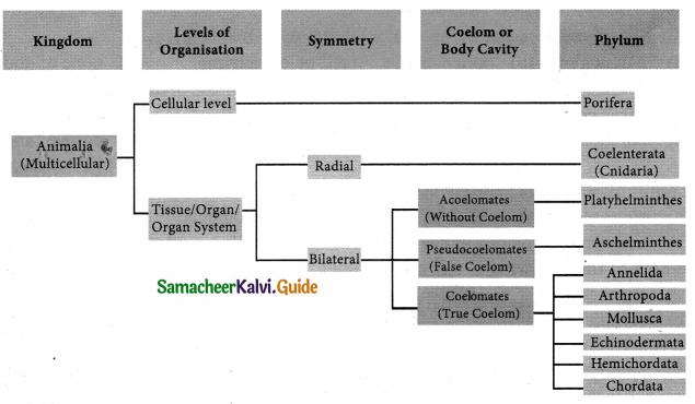 Samacheer Kalvi 9th Science Guide Chapter 17 Animal Kingdom 7