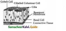 Samacheer Kalvi 9th Science Guide Chapter 18 Organization of Tissues 11