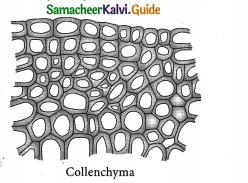 Samacheer Kalvi 9th Science Guide Chapter 18 Organization of Tissues 2