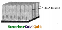Samacheer Kalvi 9th Science Guide Chapter 18 Organization of Tissues 9