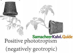 Samacheer Kalvi 9th Science Guide Chapter 19 Plant Physiology 15