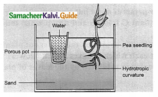 Samacheer Kalvi 9th Science Guide Chapter 19 Plant Physiology 3