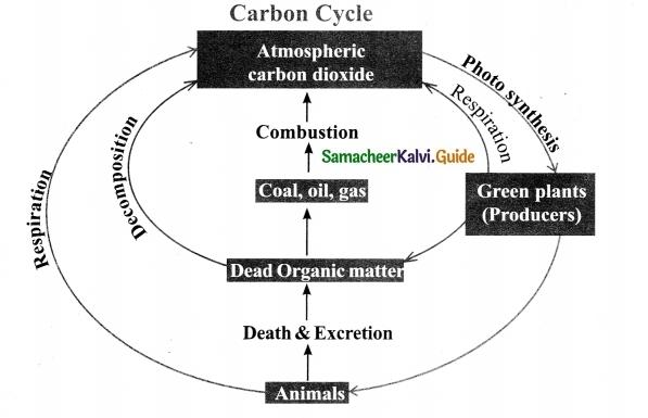 Samacheer Kalvi 9th Science Guide Chapter 24 Environmental Science-1