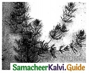 Samacheer Kalvi 9th Science Guide Chapter 24 Environmental Science-3