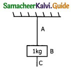 Samacheer Kalvi 11th Physics Guide Chapter 3 Laws of Motion 59