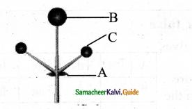 Samacheer Kalvi 11th Bio Botany Chapter 4 Reproductive Morphology 19