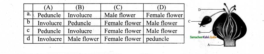 Samacheer Kalvi 11th Bio Botany Chapter 4 Reproductive Morphology 26