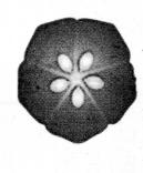Samacheer Kalvi 11th Bio Botany Chapter 4 Reproductive Morphology 3