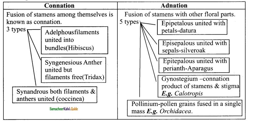 Samacheer Kalvi 11th Bio Botany Chapter 4 Reproductive Morphology 34