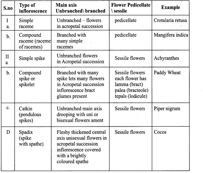 Samacheer Kalvi 11th Bio Botany Chapter 4 Reproductive Morphology 42
