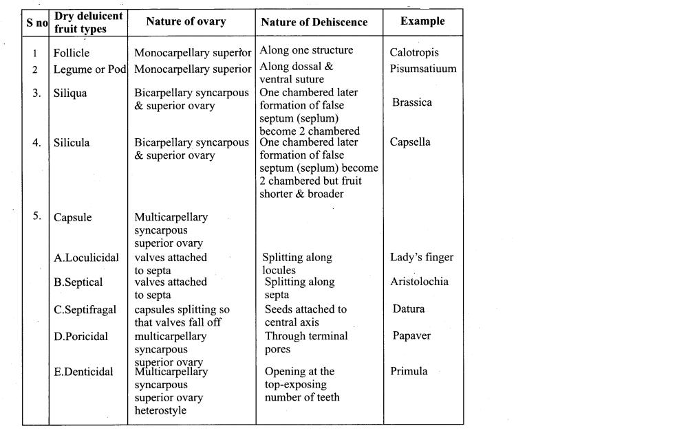 Samacheer Kalvi 11th Bio Botany Chapter 4 Reproductive Morphology 43