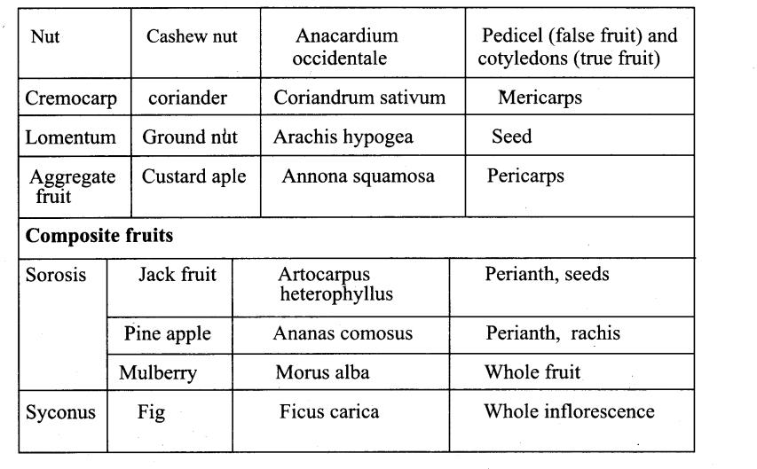 Samacheer Kalvi 11th Bio Botany Chapter 4 Reproductive Morphology 48