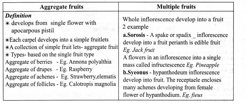 Samacheer Kalvi 11th Bio Botany Chapter 4 Reproductive Morphology 8
