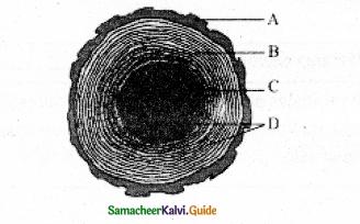 Samacheer Kalvi 11th Bio Botany Guide Chapter 10 Secondary Growth 6