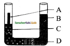 Samacheer Kalvi 11th Bio Botany Guide Chapter 11 Transport in Plants 13