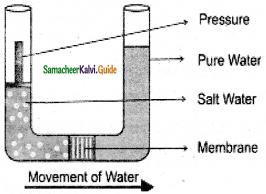Samacheer Kalvi 11th Bio Botany Guide Chapter 11 Transport in Plants 14
