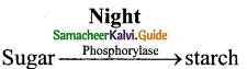 Samacheer Kalvi 11th Bio Botany Guide Chapter 11 Transport in Plants 2