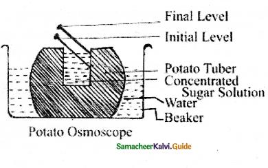 Samacheer Kalvi 11th Bio Botany Guide Chapter 11 Transport in Plants 20