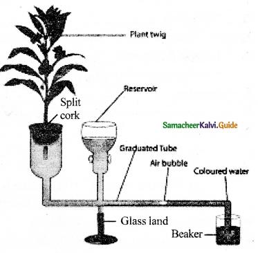 Samacheer Kalvi 11th Bio Botany Guide Chapter 11 Transport in Plants 21
