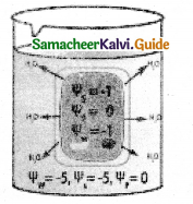 Samacheer Kalvi 11th Bio Botany Guide Chapter 11 Transport in Plants 4
