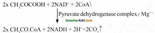 Samacheer Kalvi 11th Bio Botany Guide Chapter 14 Respiration 11