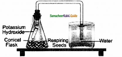 Samacheer Kalvi 11th Bio Botany Guide Chapter 14 Respiration 14