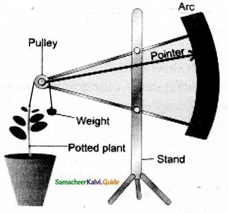 Samacheer Kalvi 11th Bio Botany Guide Chapter 15 Plant Growth and Development 10