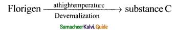 Samacheer Kalvi 11th Bio Botany Guide Chapter 15 Plant Growth and Development 9