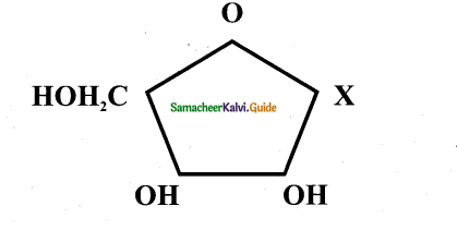 Samacheer Kalvi 11th Bio Botany Guide Chapter 8 Biomolecules 1