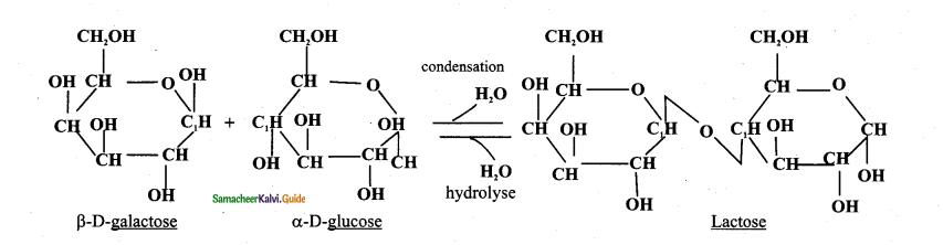Samacheer Kalvi 11th Bio Botany Guide Chapter 8 Biomolecules 18