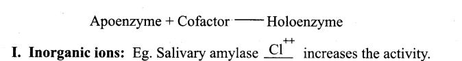Samacheer Kalvi 11th Bio Botany Guide Chapter 8 Biomolecules 24