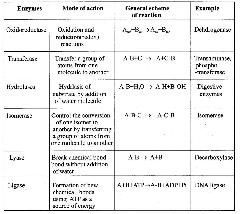 Samacheer Kalvi 11th Bio Botany Guide Chapter 8 Biomolecules 3
