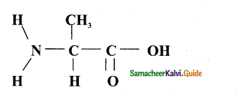 Samacheer Kalvi 11th Bio Botany Guide Chapter 8 Biomolecules 4