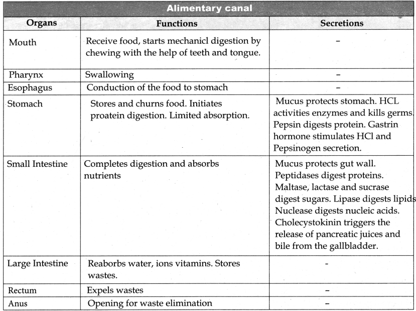 Samacheer Kalvi 11th Bio Zoology Guide Chapter 5 Digestion and Absorption 29