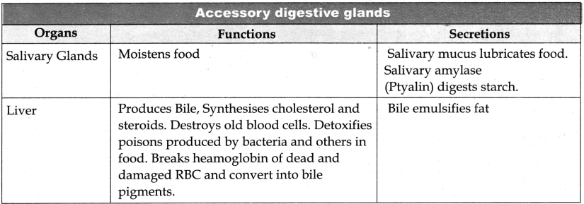 Samacheer Kalvi 11th Bio Zoology Guide Chapter 5 Digestion and Absorption 30